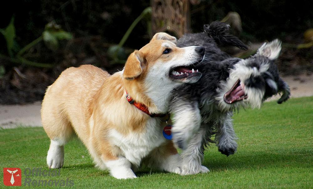 Pets-playing.jpg